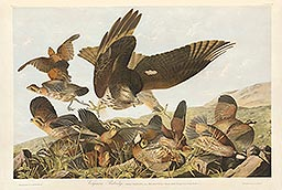 1-2, Pl 289, Virginian Partridge