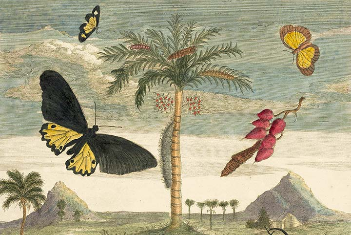 Detail of Merian Plate 72, Stag Beetle, Palm Tree